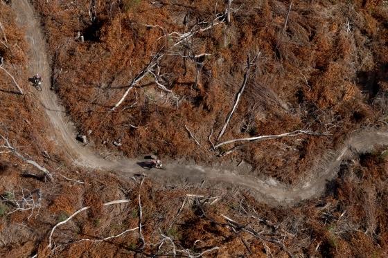 Aerial of burnt trees
