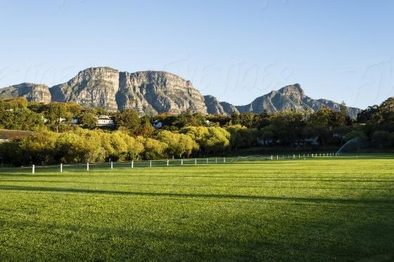 Green school field