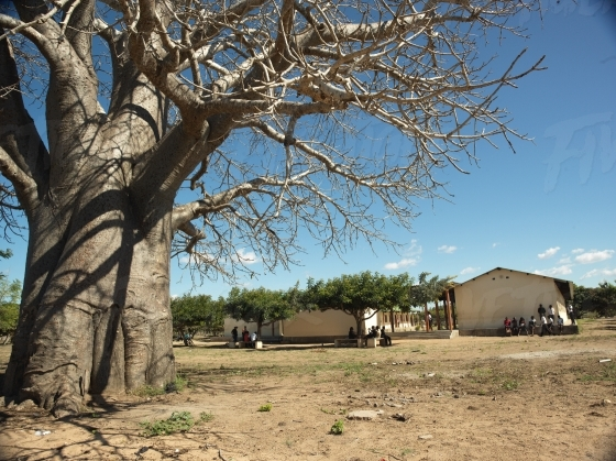 Rural school under a Baobab tree
