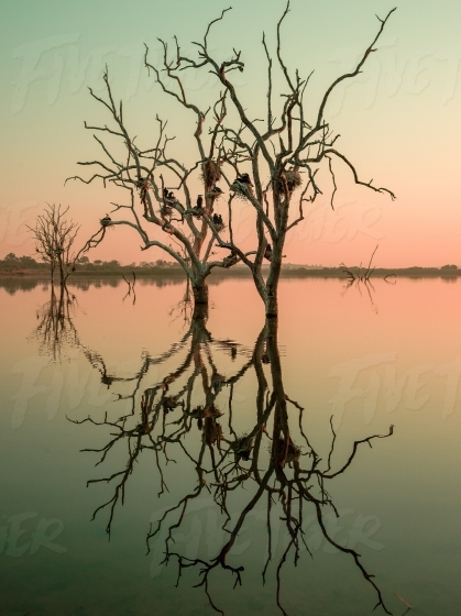 Bird nests in beautiful dead tree at dawn