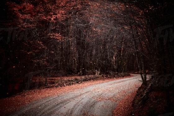 Treelined street in autum