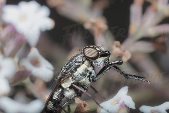 Close up of composate eye of a fly