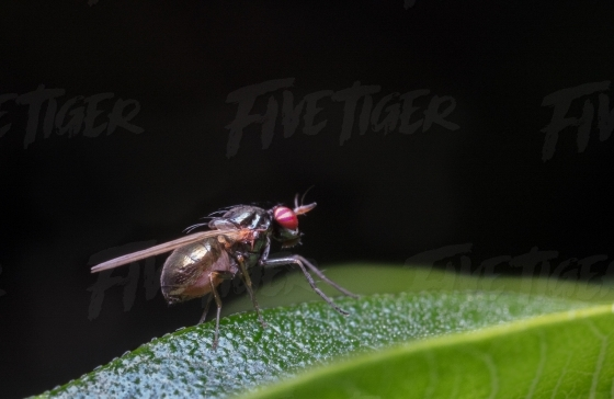 Close up of fly on a leaf