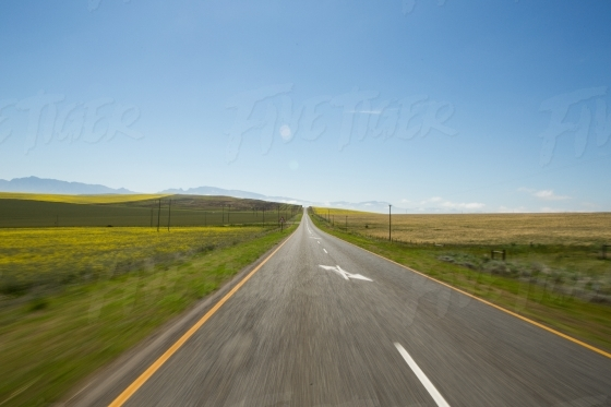 Driving through canola fields  in the Overberg