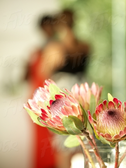 Red Proteas in a vase at home