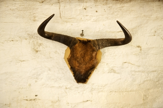 Wall mounted horns