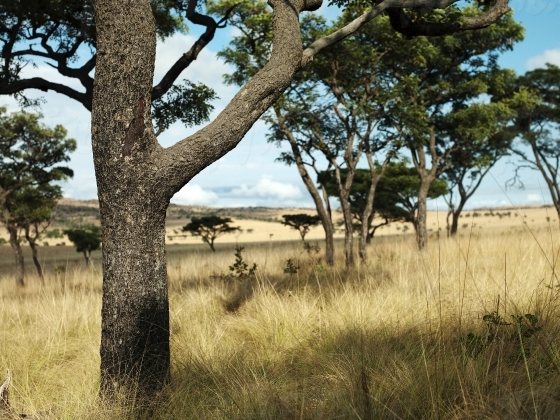 South African grassy plain