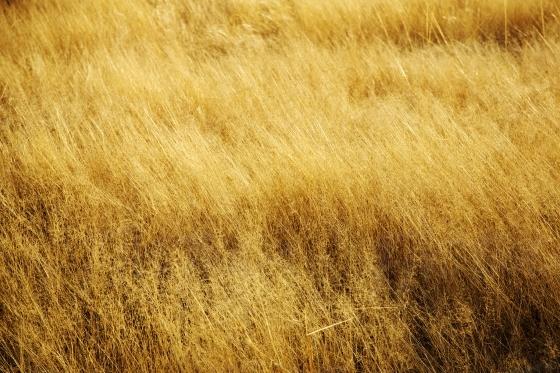 Dry veld