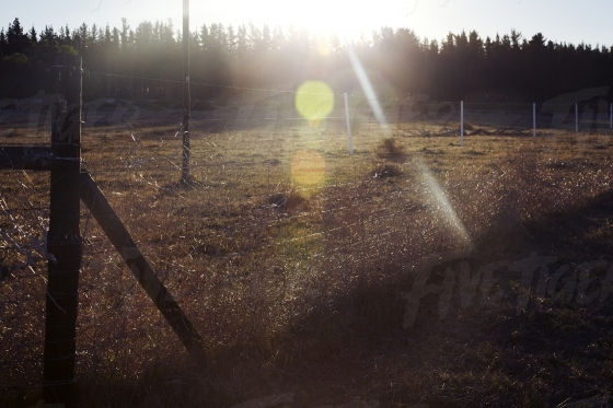 Field and fence with lens flare