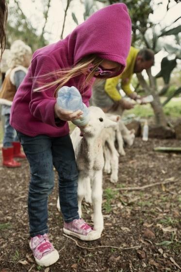 Young girl feeding a lamb
