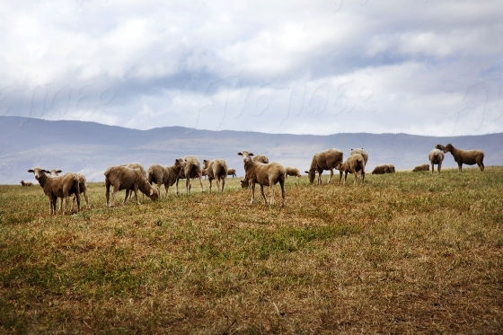 Iconic Overberg landscape