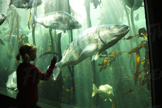 Little girl at the Aquarium