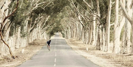 Spectacular tree-lined road with cyclist