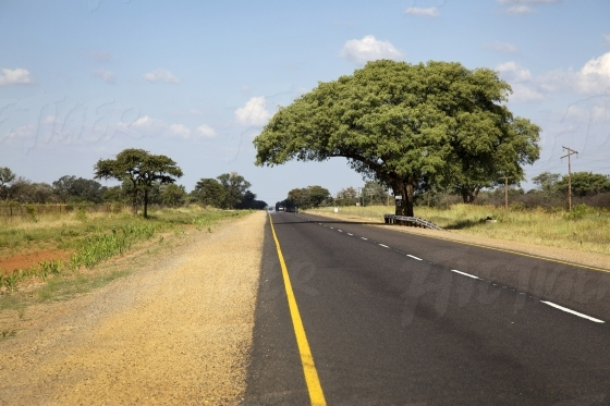 Tree alongside a road