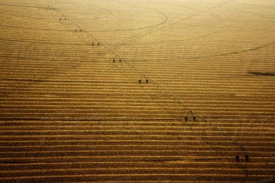 Aerial golden crop landscape