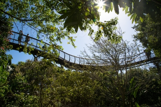 Tree canopy Boomslang walk at Kirstenbosch in Cape Town