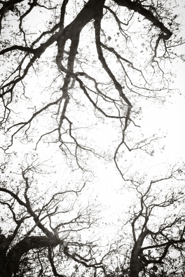 Branches of a tree on white sky
