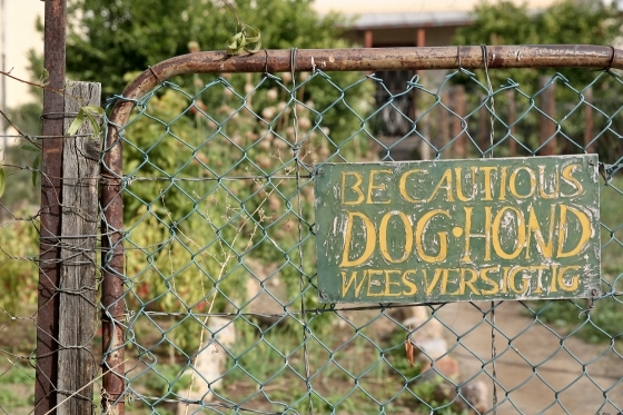 BE CAUTIOUS DOG