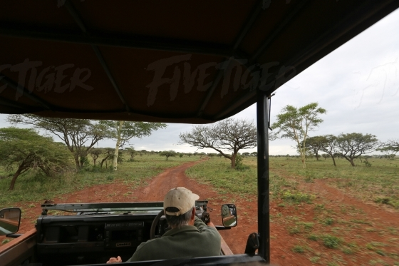 Veiw from inside a game drive vehicle on a game drive