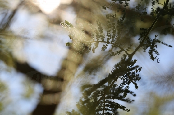 Shadows of a tree