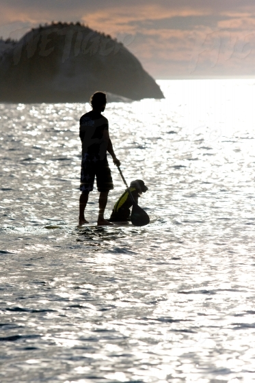 SUP boarding in the sea with a dog