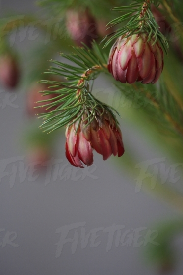 Deep red fynbos