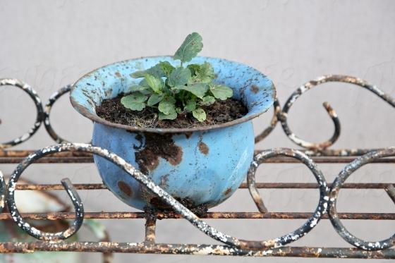 Rusty pot plant