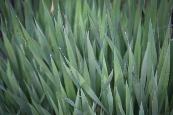 Wild green grass