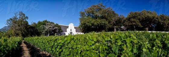 Panoramic vineyard with Cape Dutch home