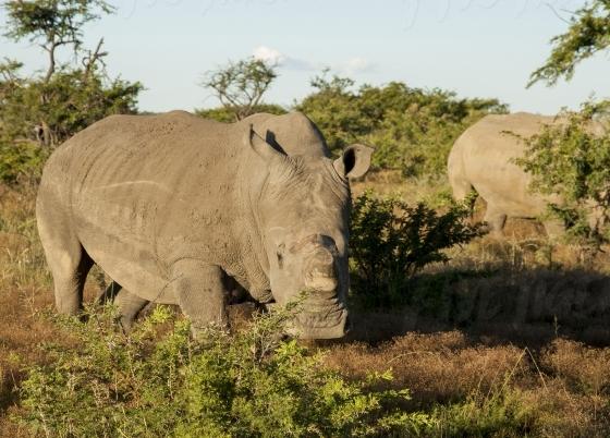 Rhino spotting